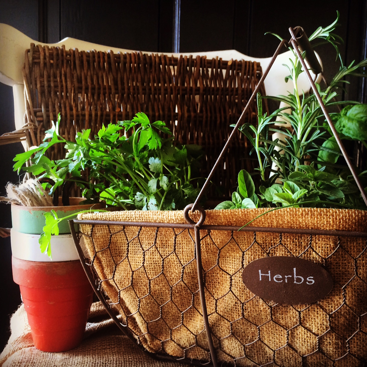 Basket of Fresh Herbs by Patricia for Casagiove